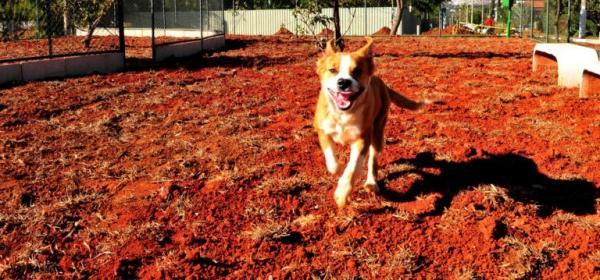 Lago Norte ganha espaço para convivência de cães